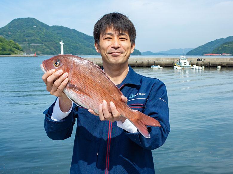 養殖真鯛の特徴